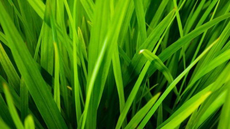 Kako pravilno negovati zelenico okrog hiše?