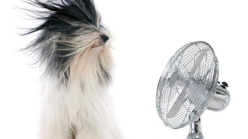 9 načinov za ohladitev vašega doma to poletje